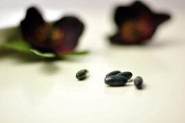 Jaspis oliwka
